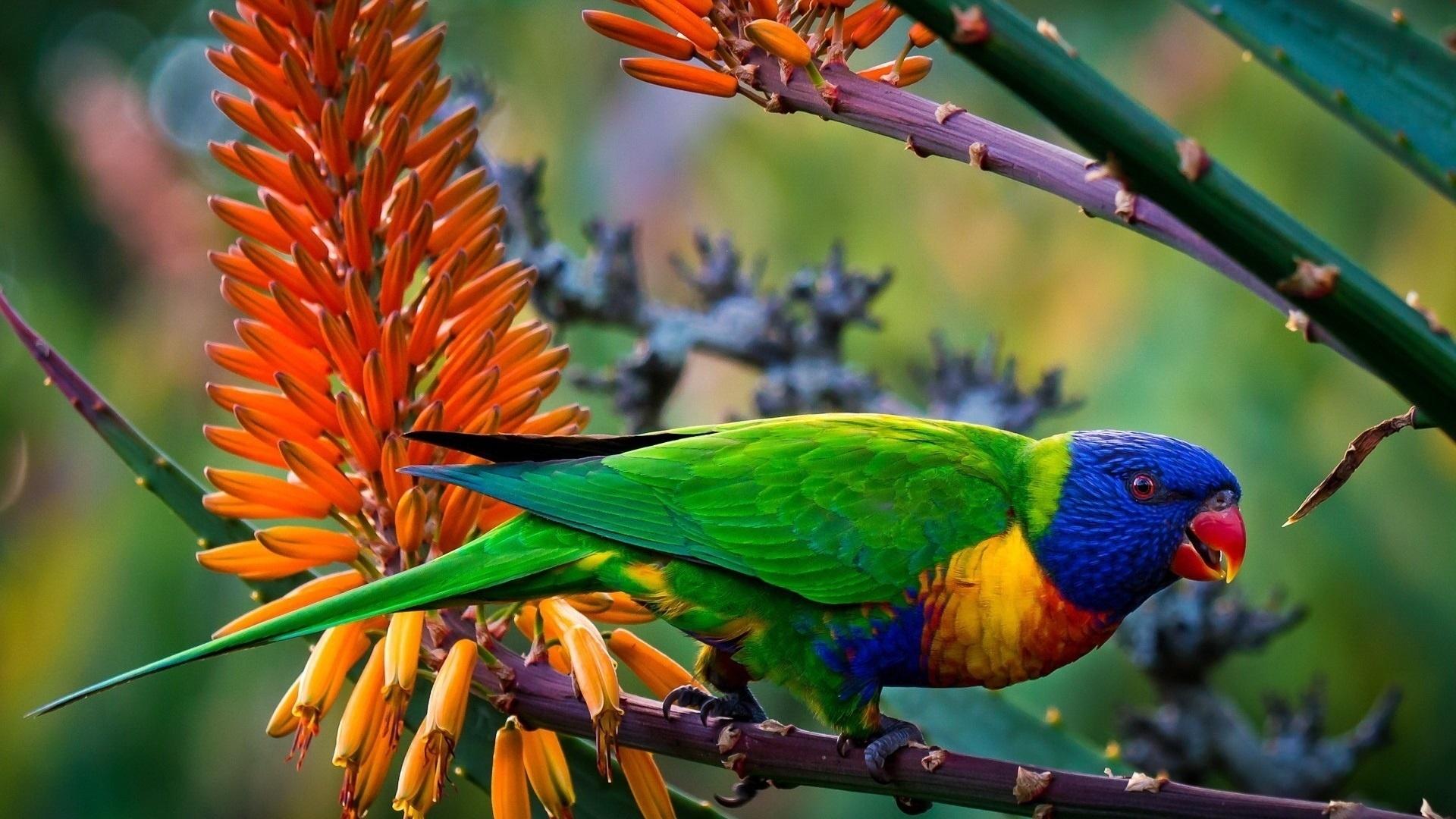 Colorful Bird desktop wallpaper