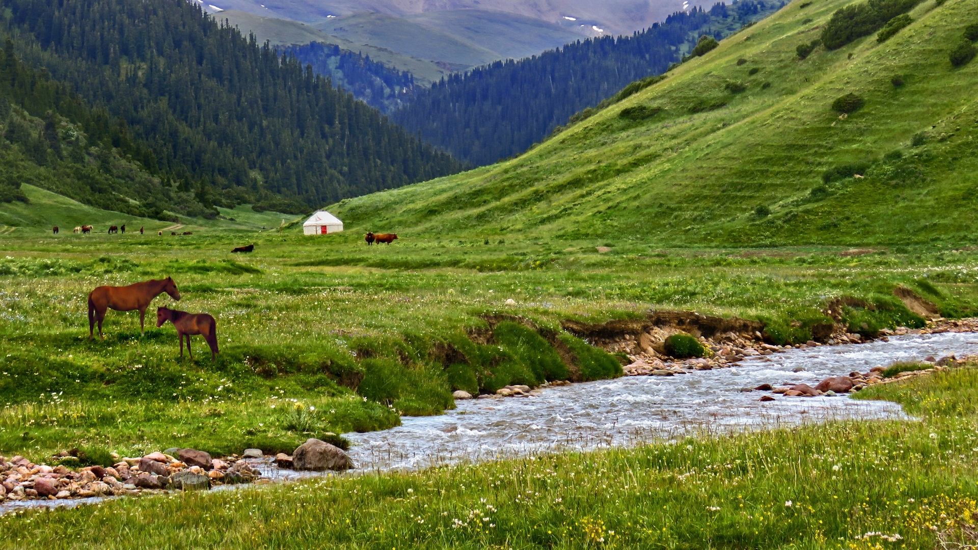 Mongolia Nature computer background