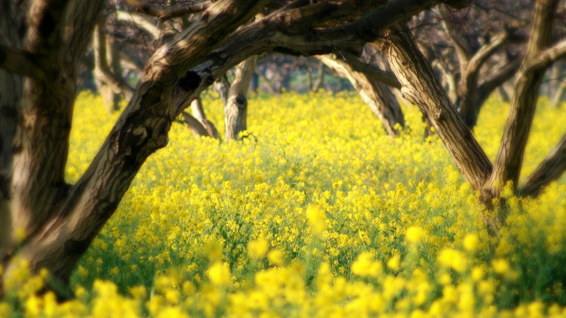 Yellow Nature wallpaper hd