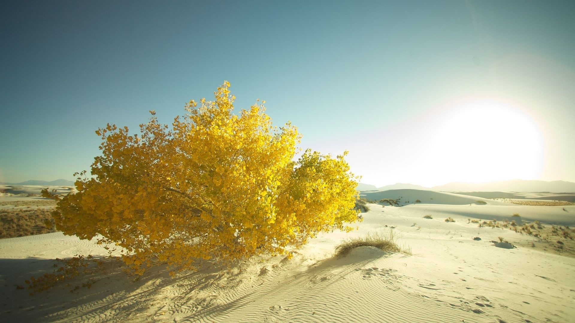 Yellow Nature hd background