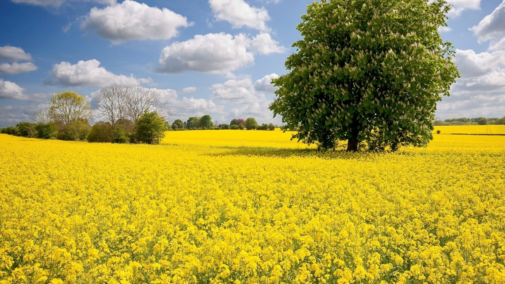 Yellow Nature desktop background
