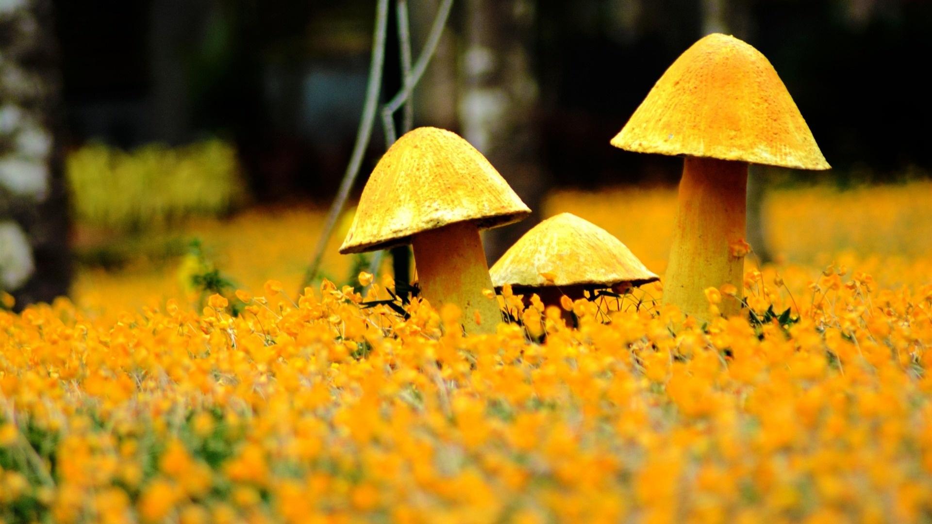 Yellow Nature background wallpaper