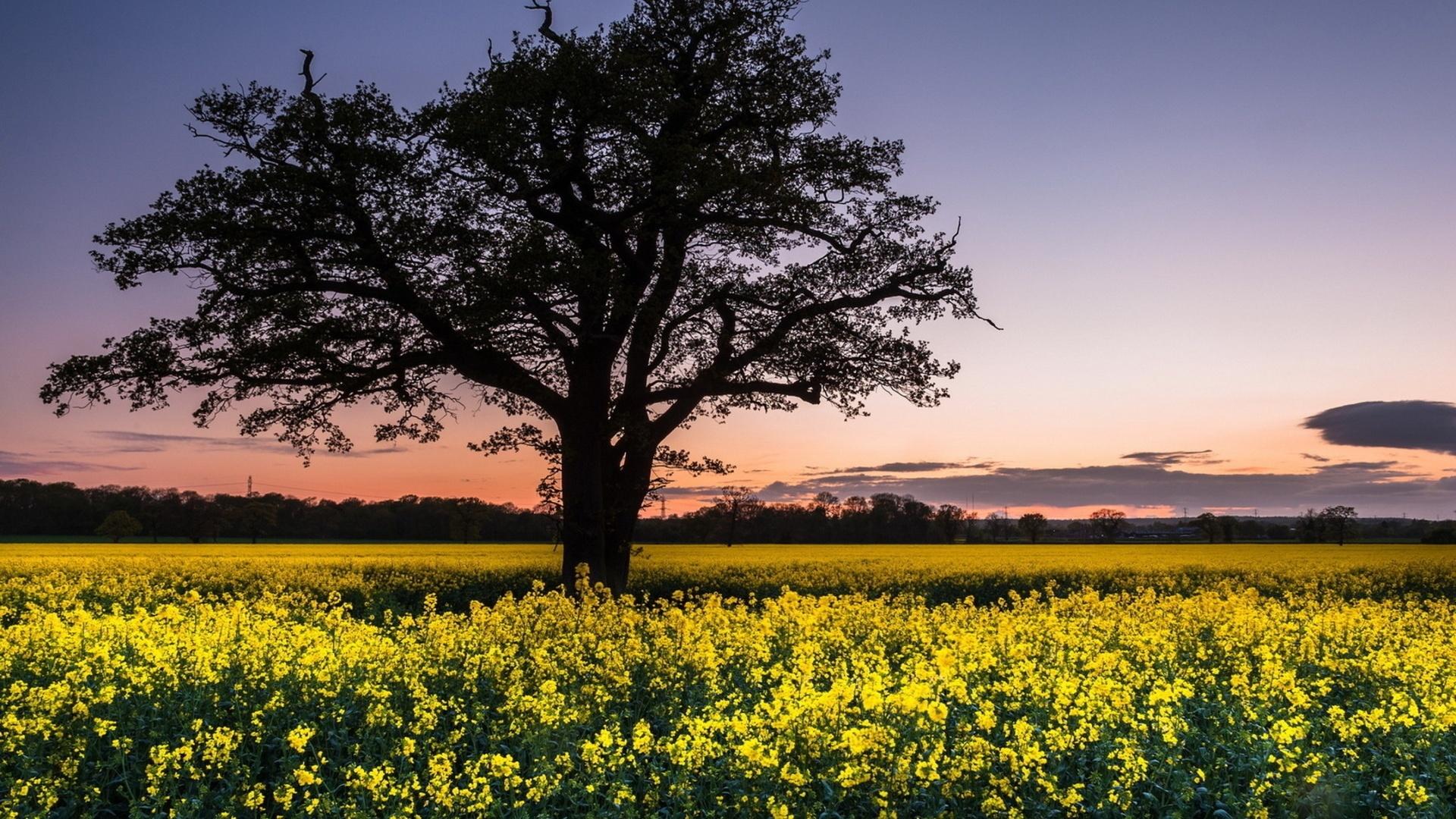 Yellow Nature cool wallpaper