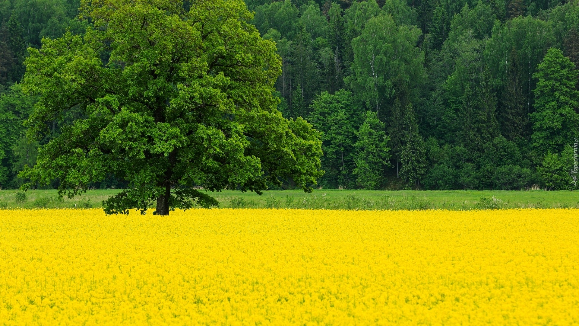 Yellow Nature best picture