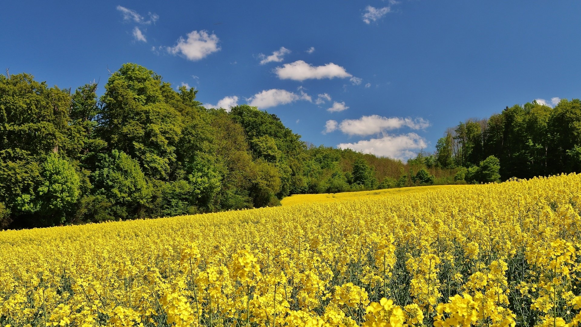Yellow Nature free pic