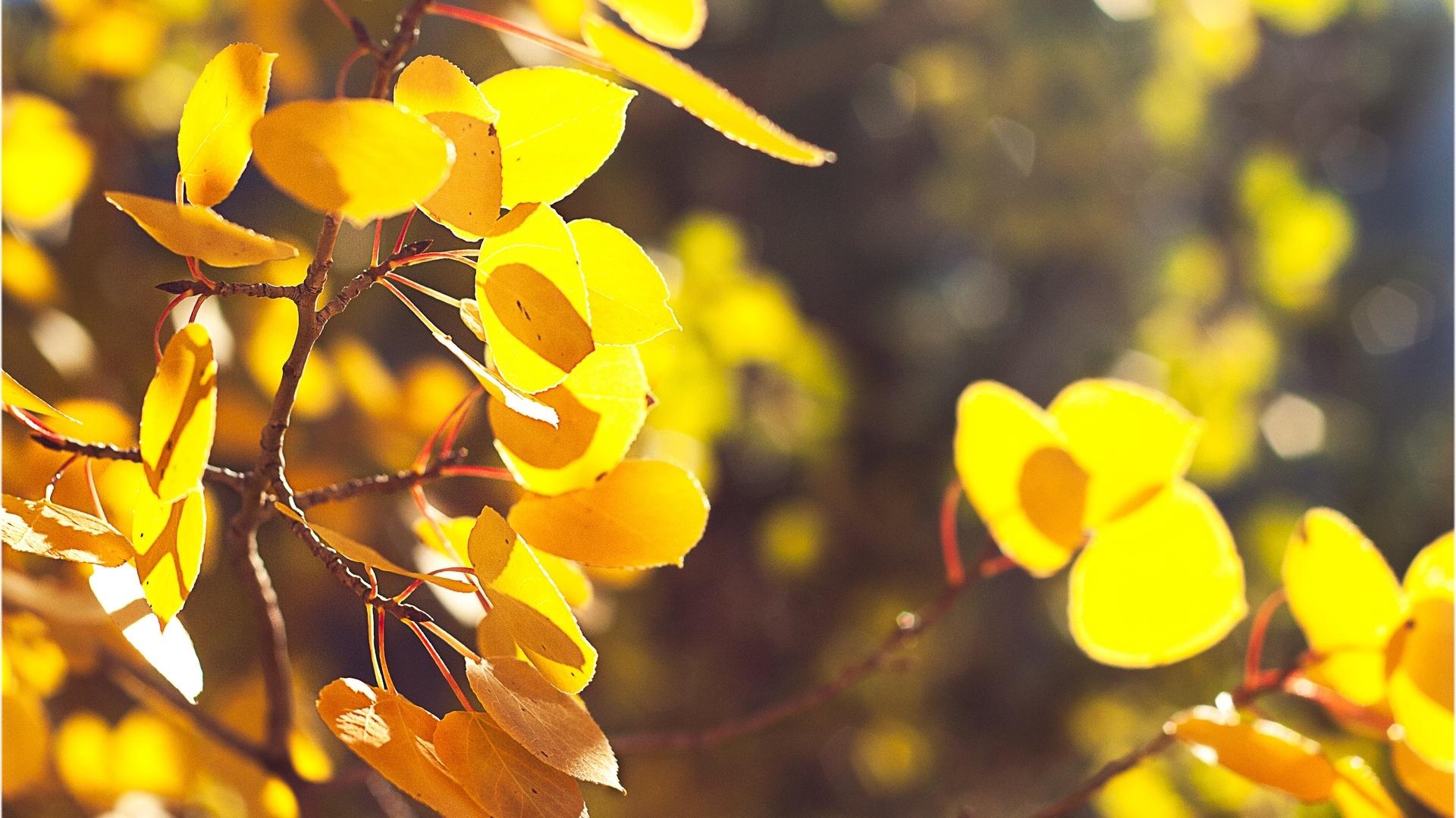 Yellow Nature windows background