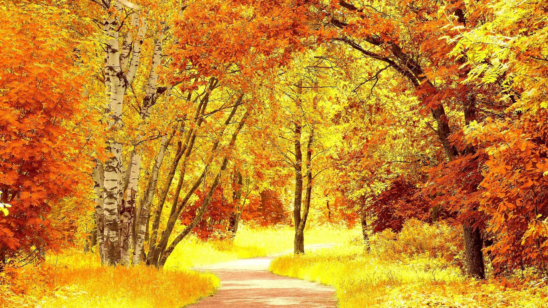 Yellow Nature 1920x1080 wallpaper