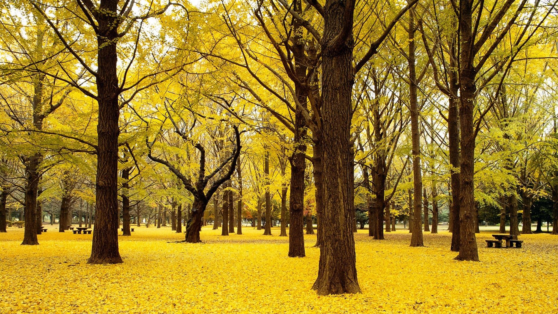 Yellow Nature computer wallpaper