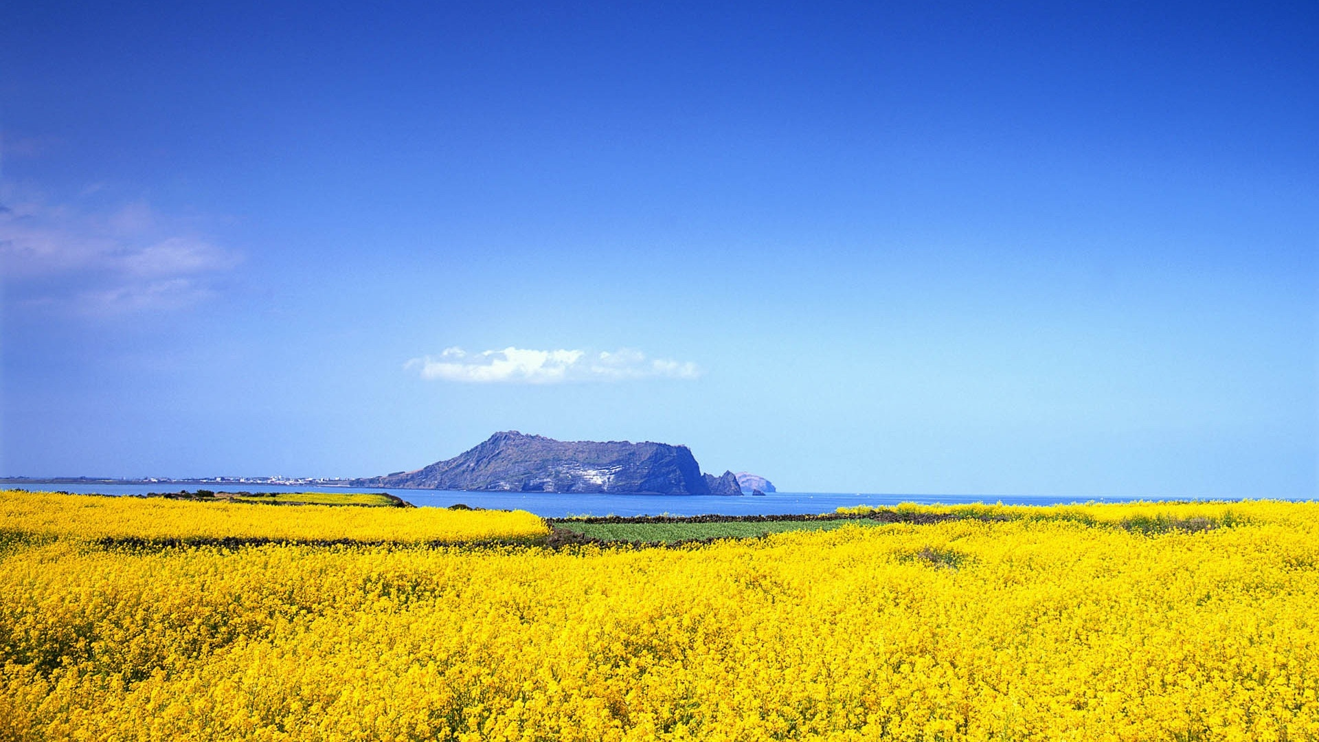 Yellow Nature best background