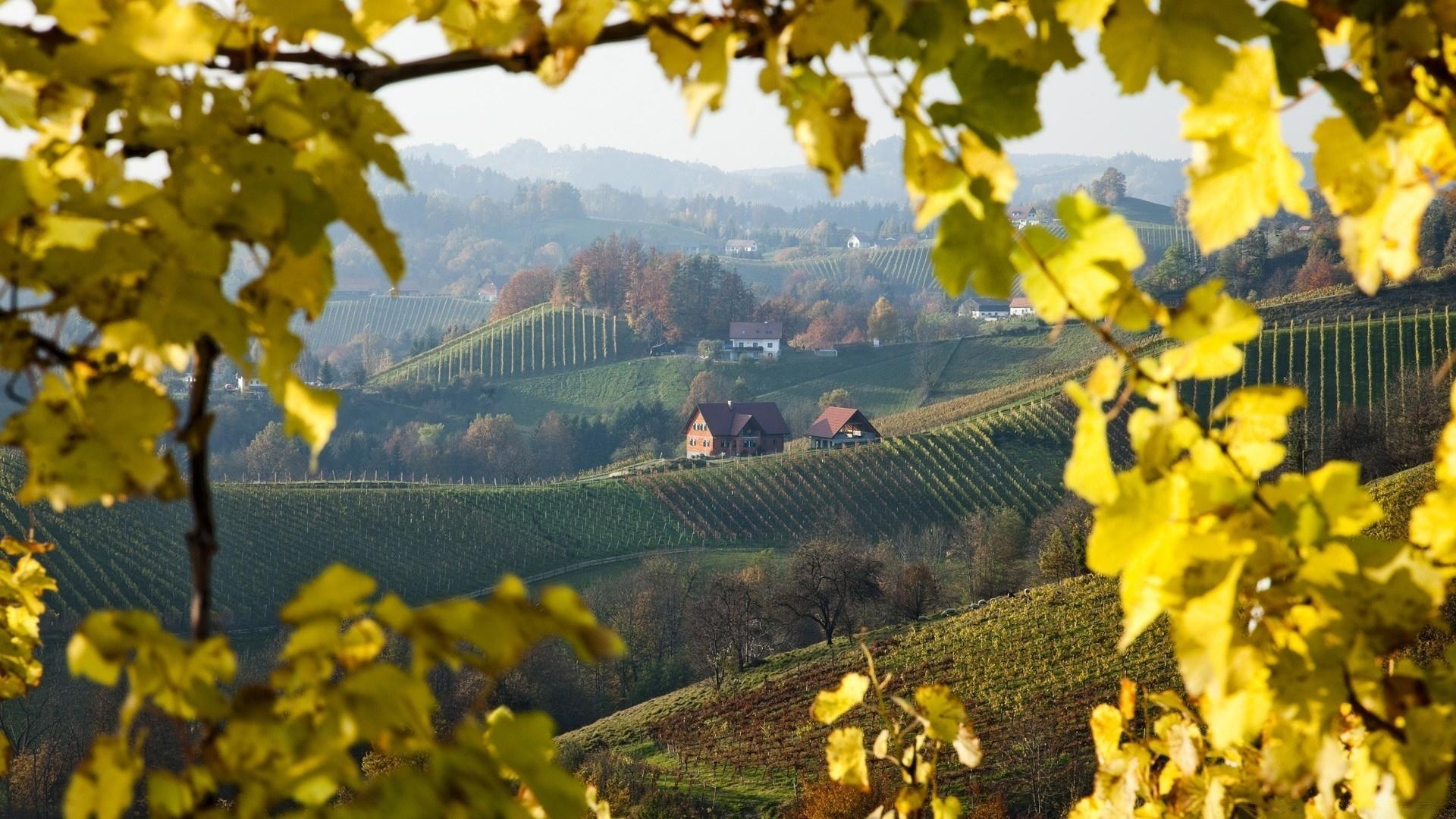 Vineyard 1920x1080 wallpaper