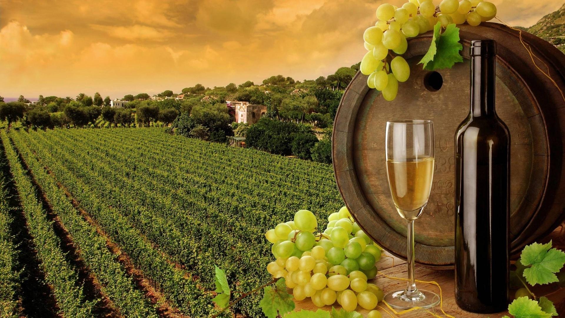 Vineyard laptop wallpaper