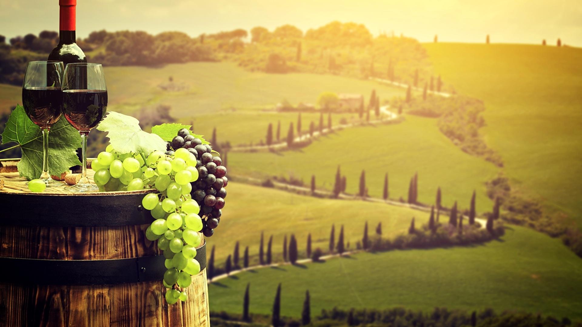 Vineyard pc wallpaper