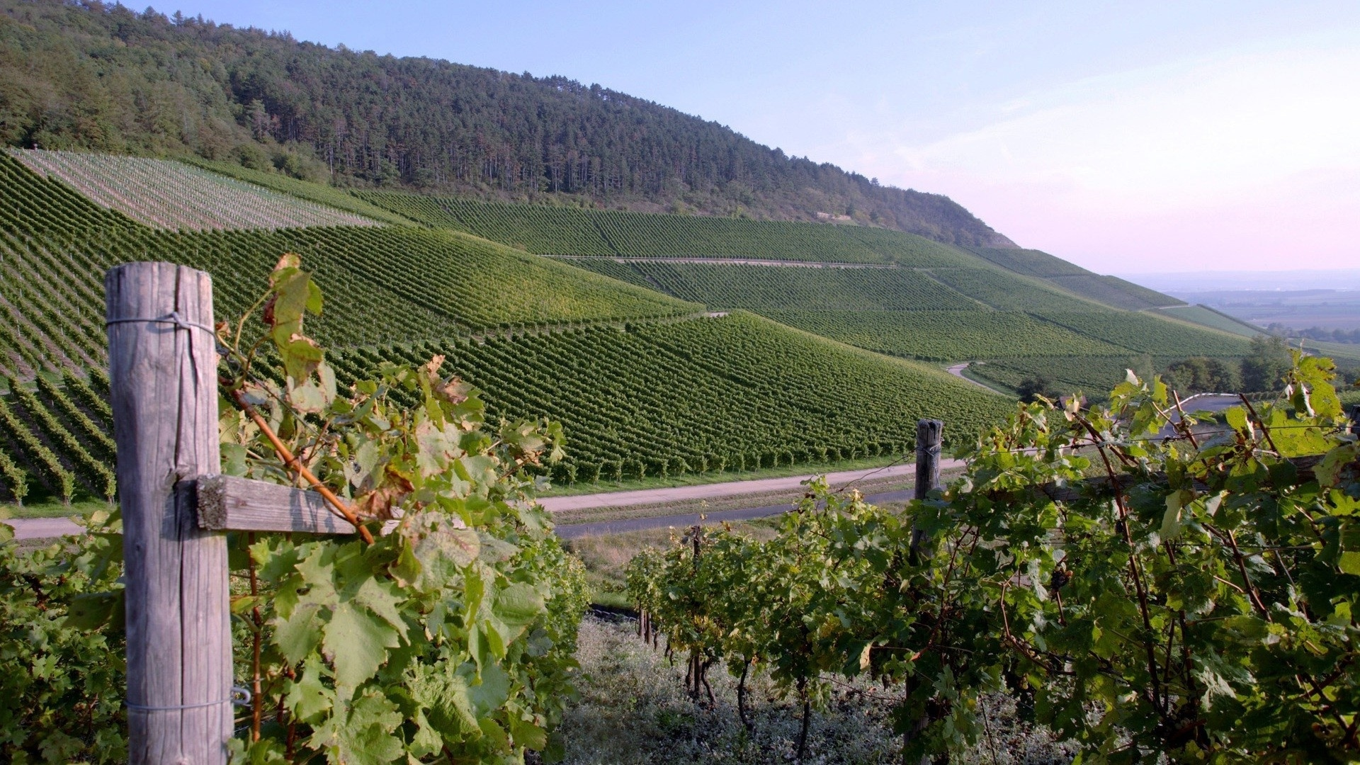 Vineyard cool background