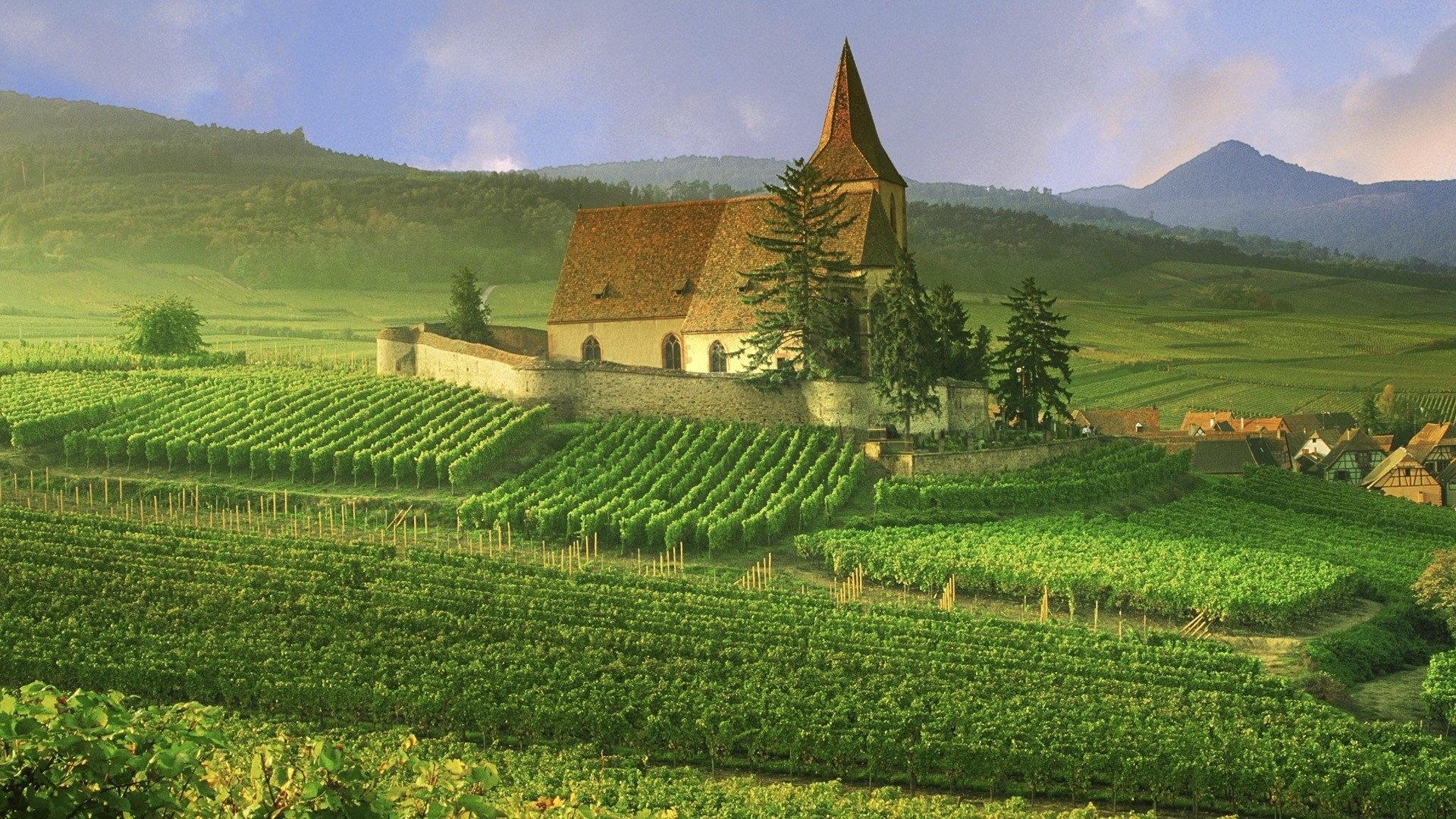 Vineyard wallpaper hd