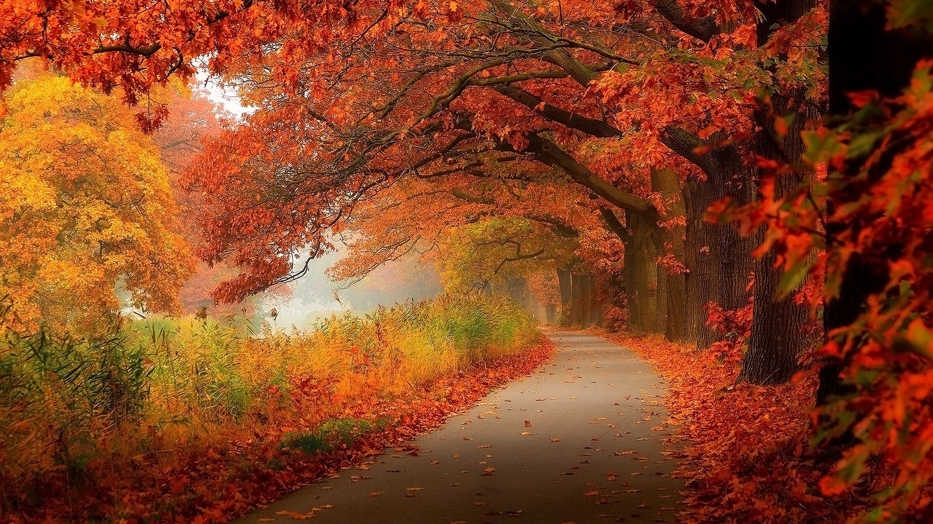 Autumn best picture
