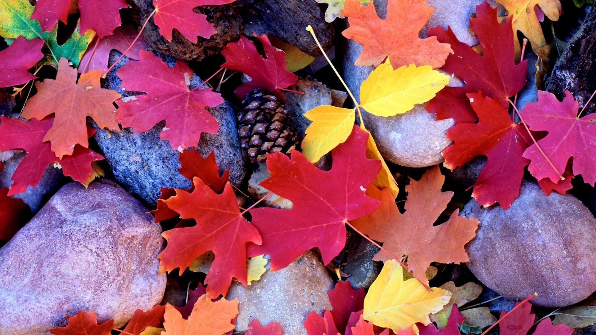 Autumn best picture