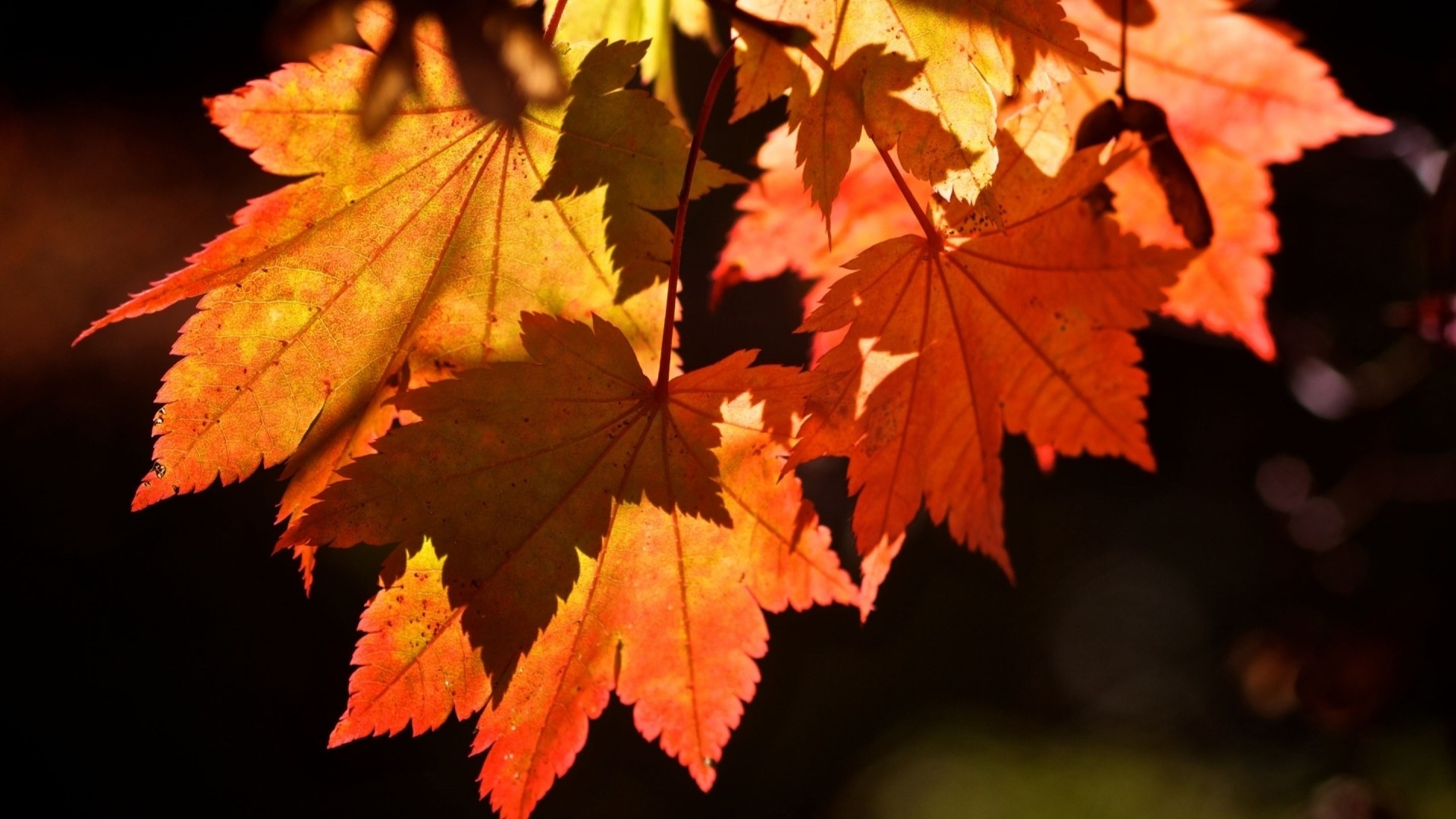 Autumn desktop wallpaper free download