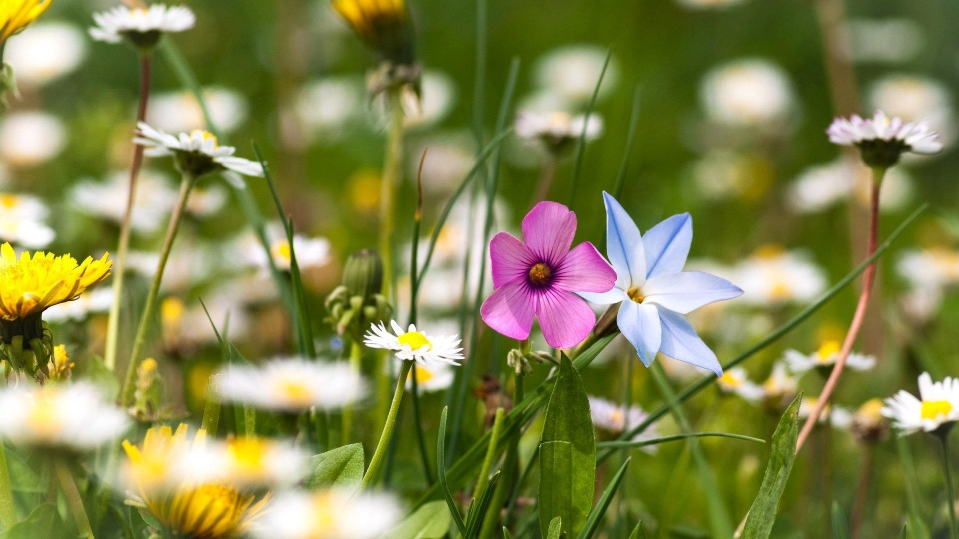 Summer free photo