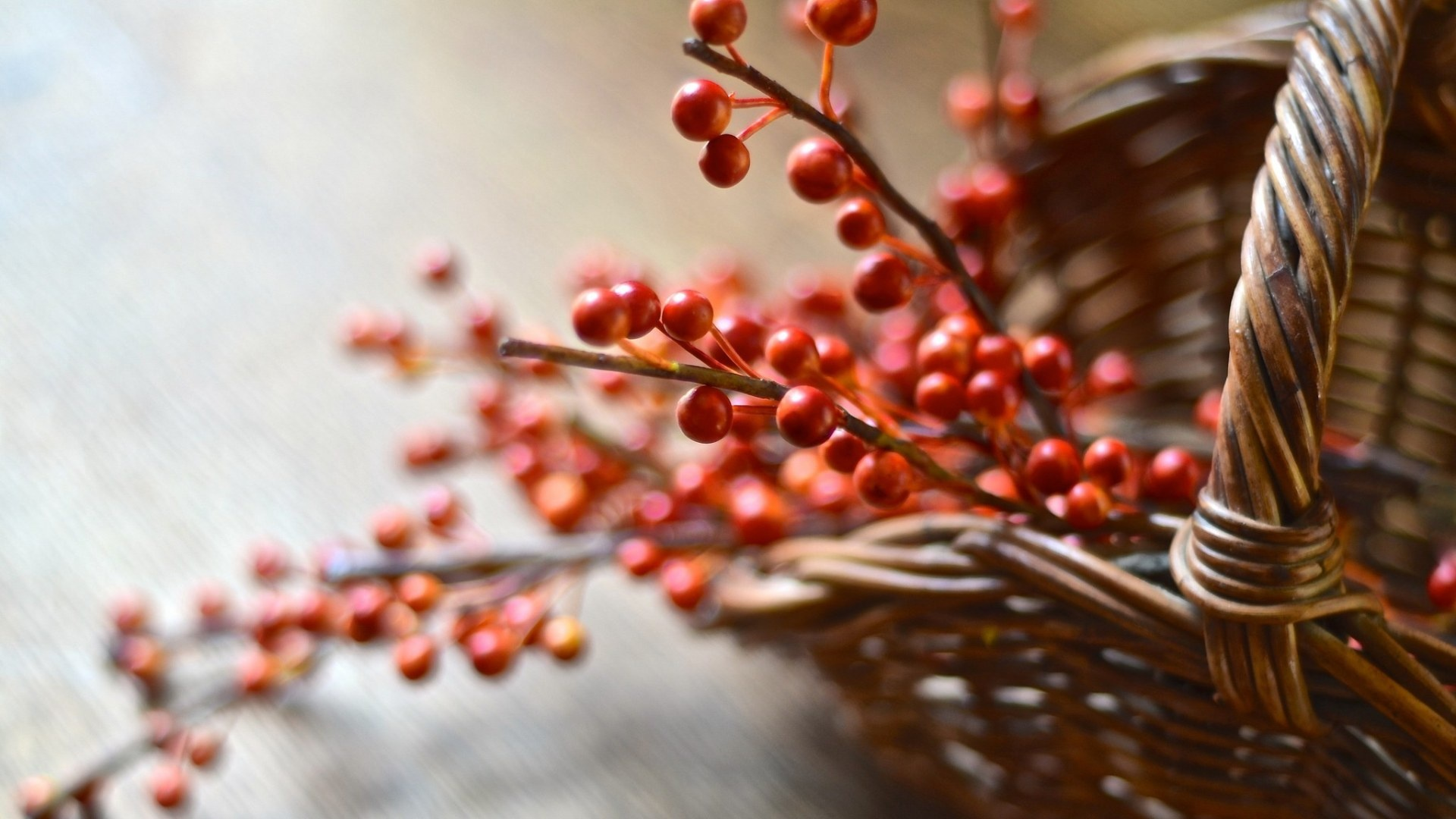 Berries On A Branch hd background