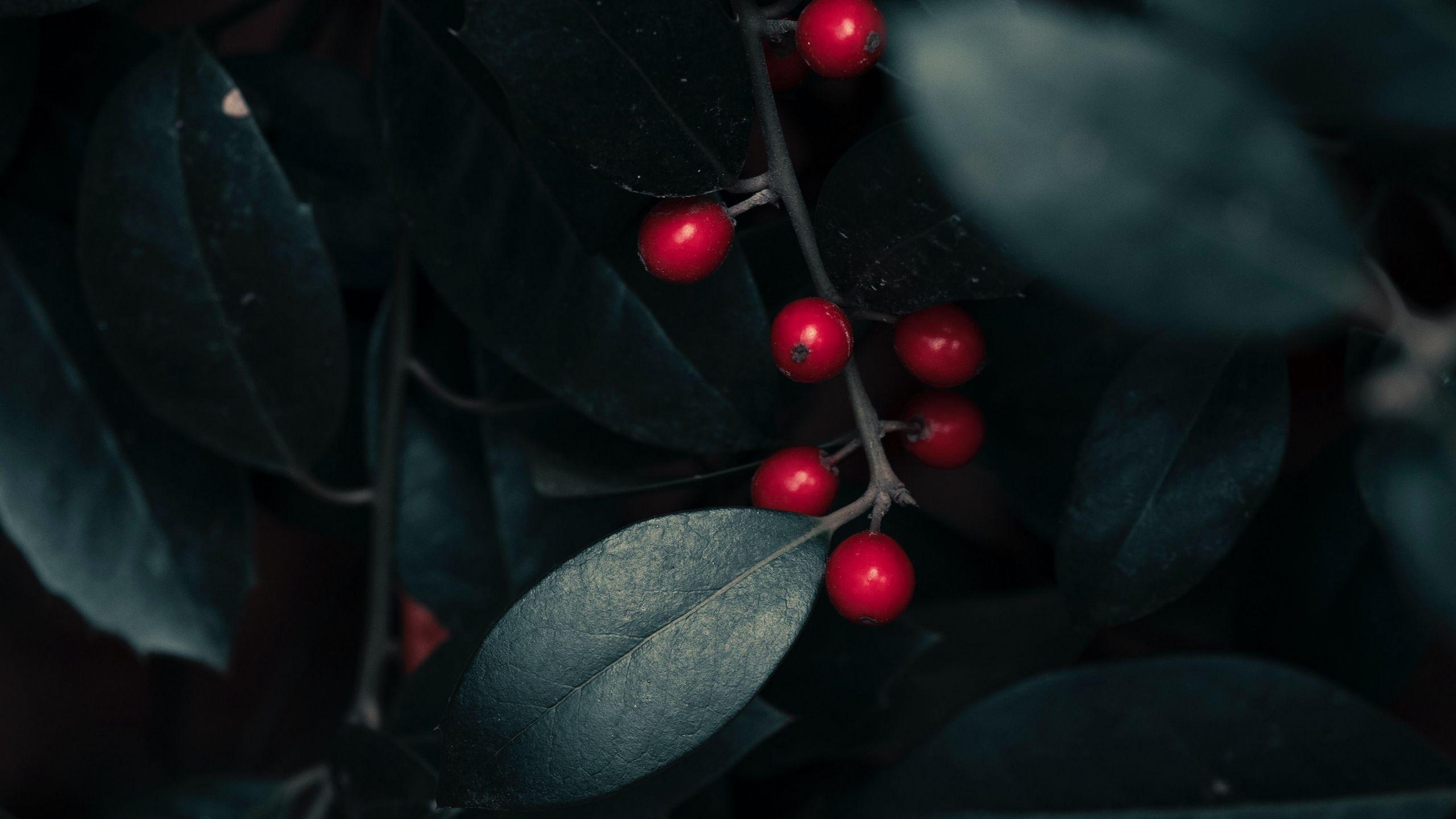 Berries On A Branch wallpaper hd