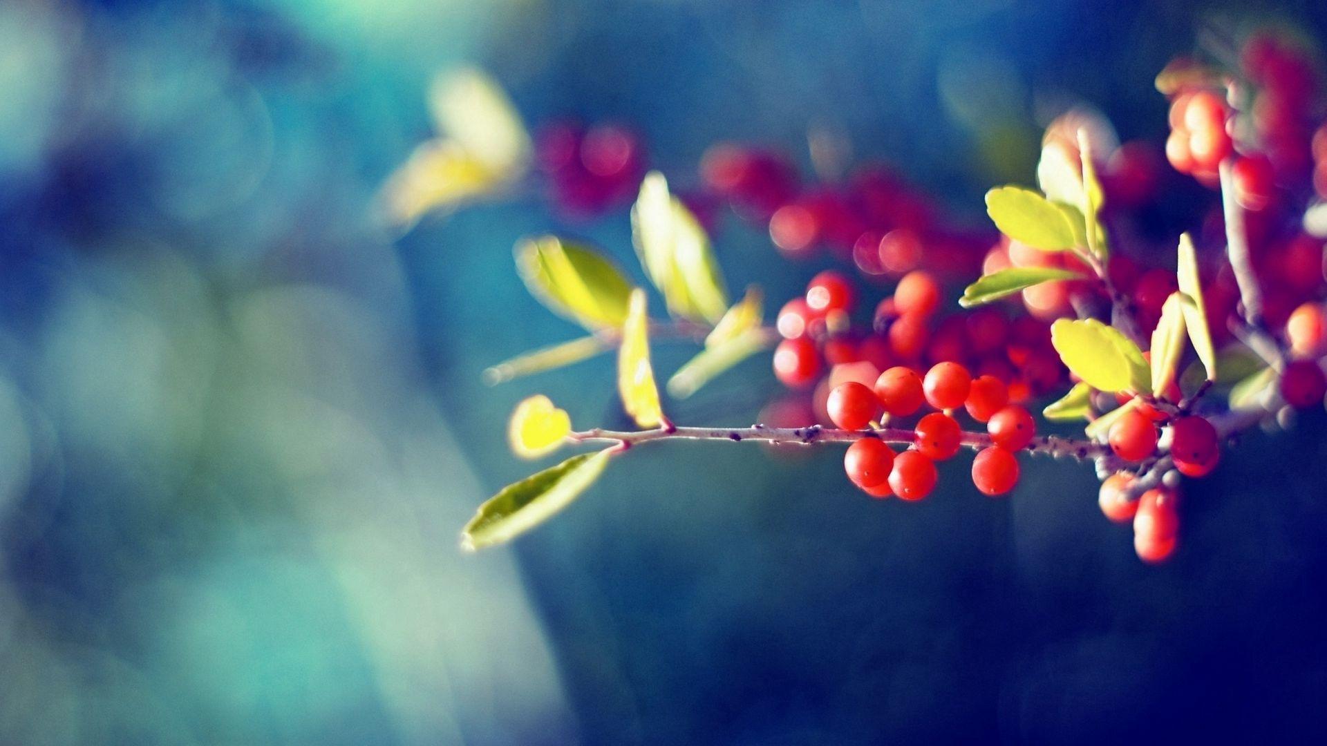 Berries On A Branch desktop wallpaper free download