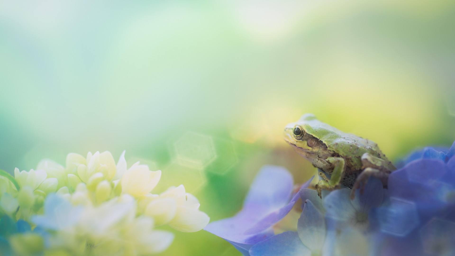 Cartoon Frog free picture