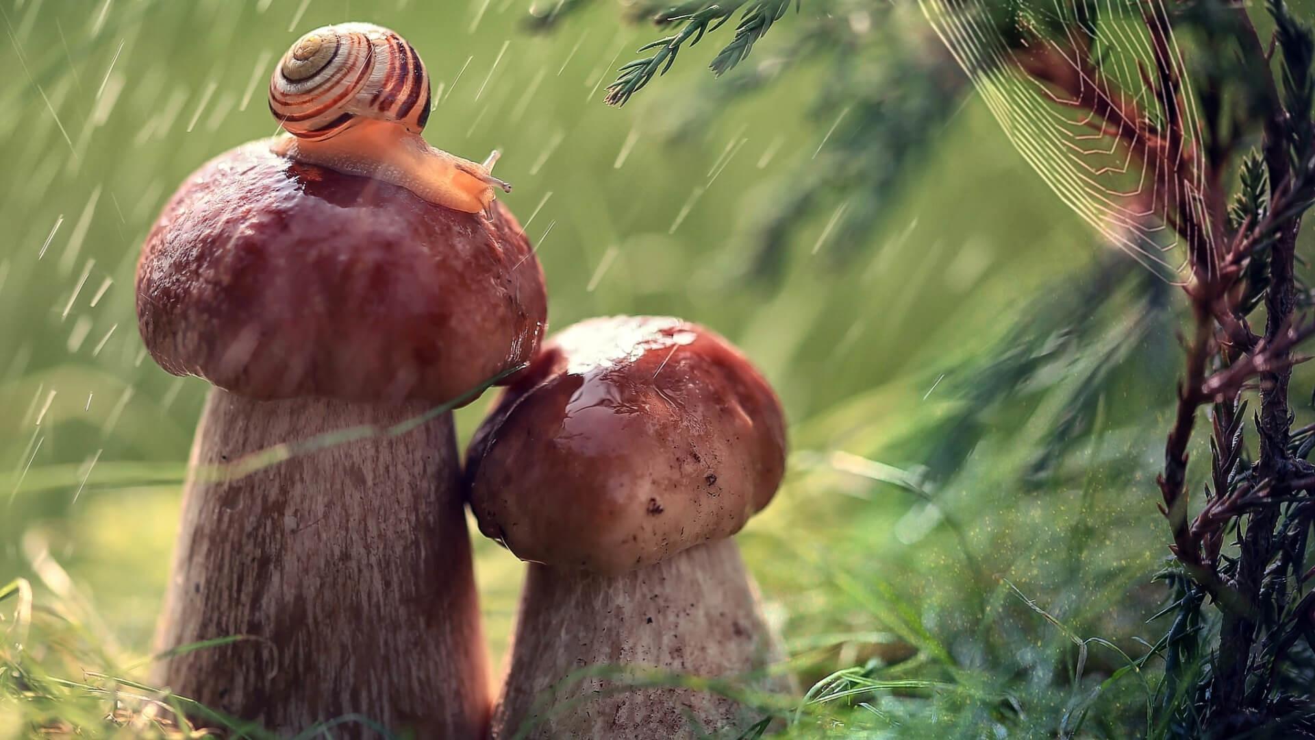 Macro Mushrooms computer background