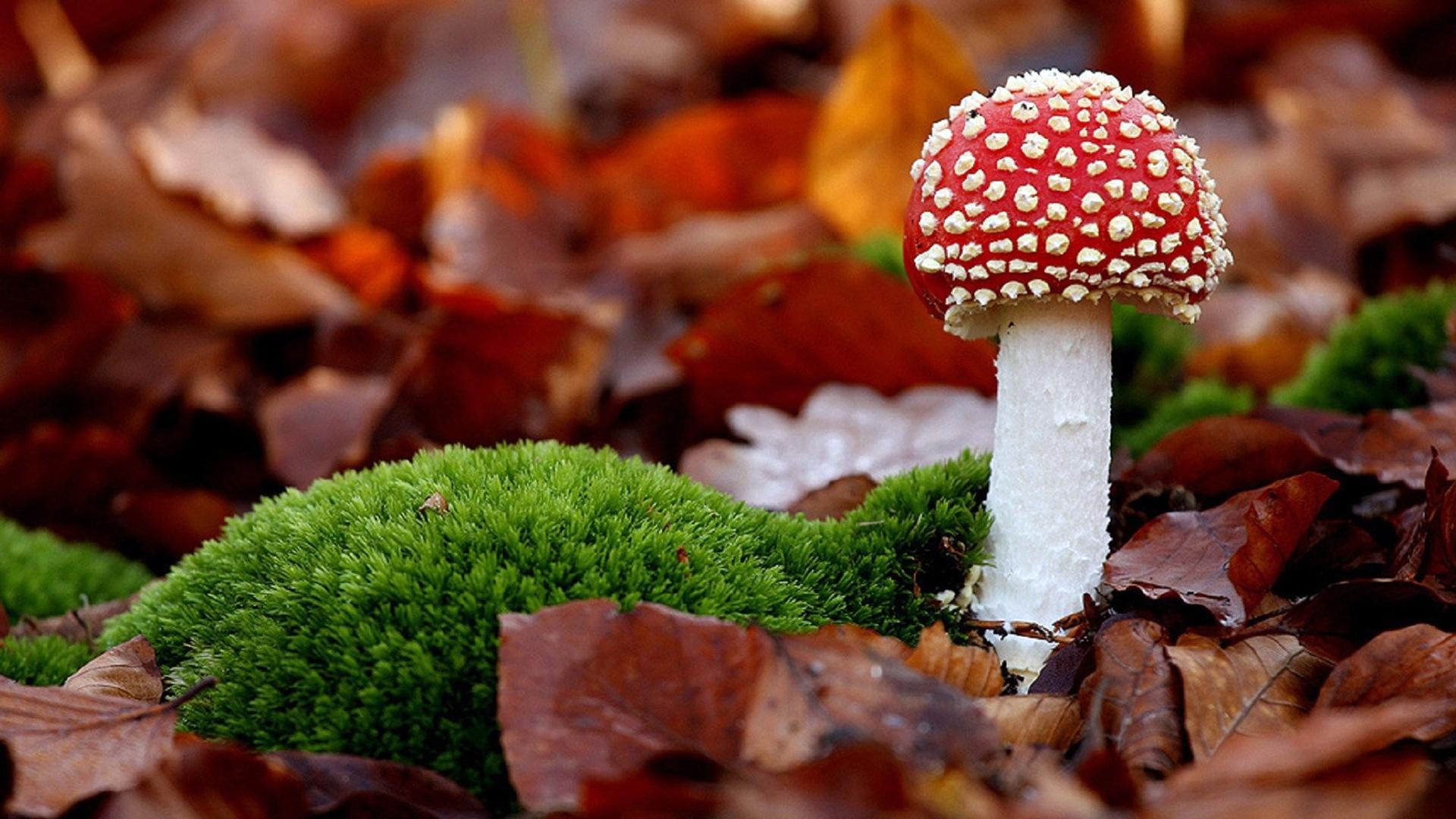 Macro Mushrooms laptop wallpaper