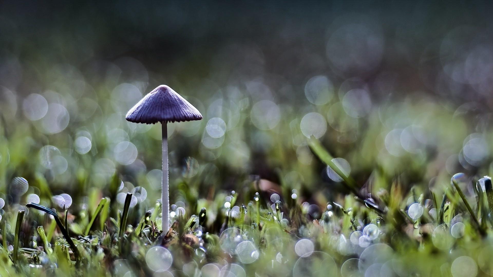 Macro Mushrooms cool wallpaper