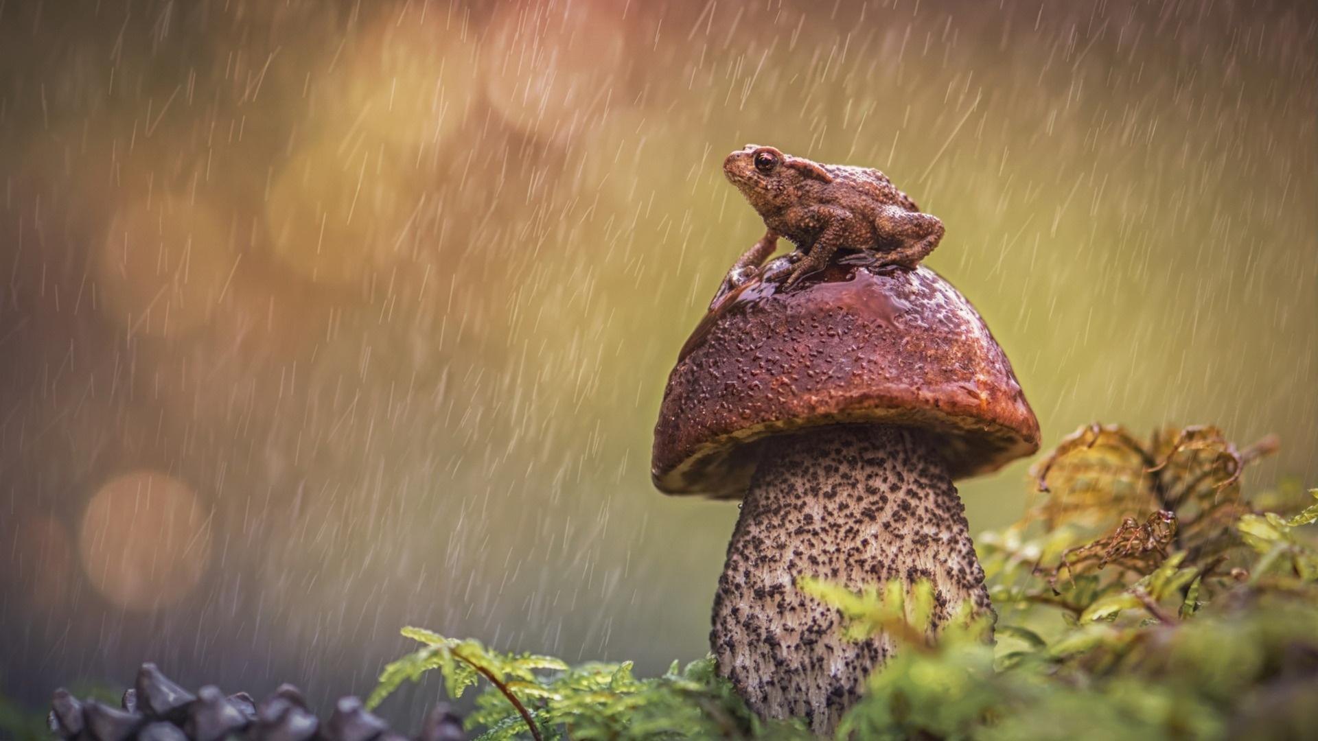 Macro Mushrooms free image