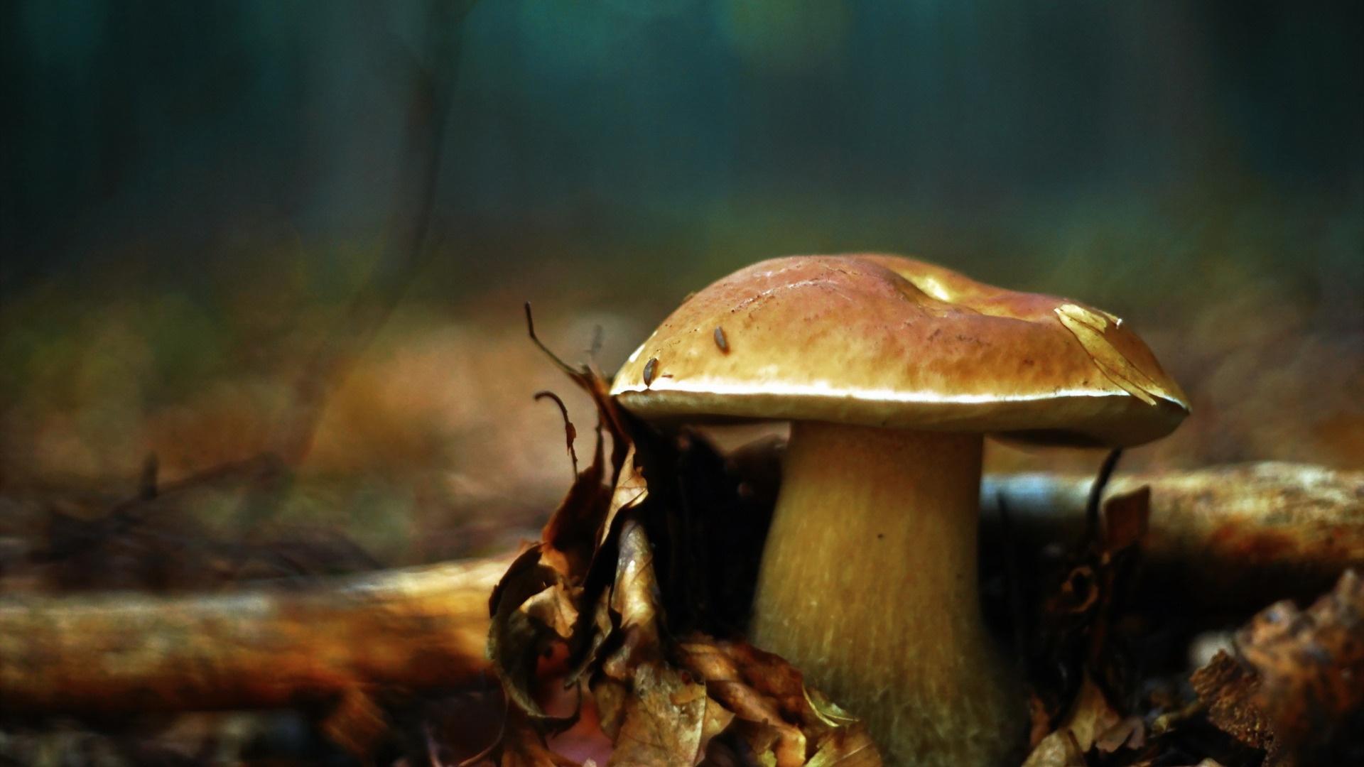 Macro Mushrooms windows wallpaper