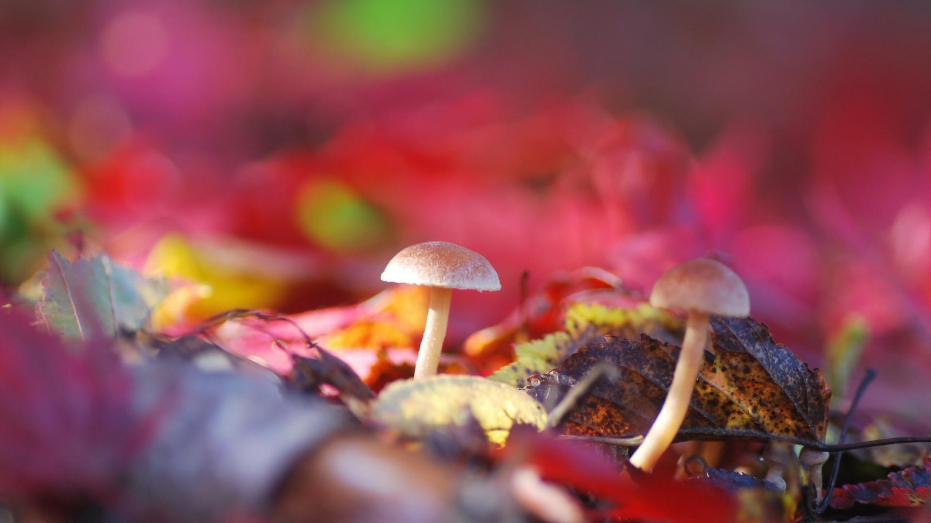 Macro Mushrooms background picture