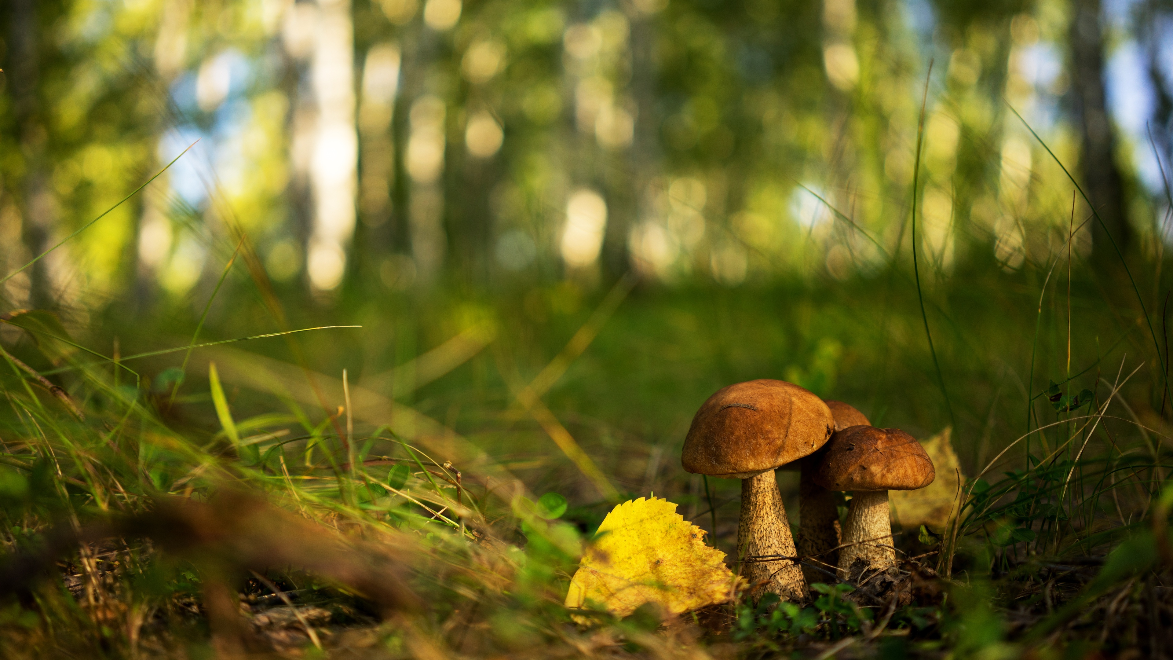 Macro Mushrooms background wallpaper