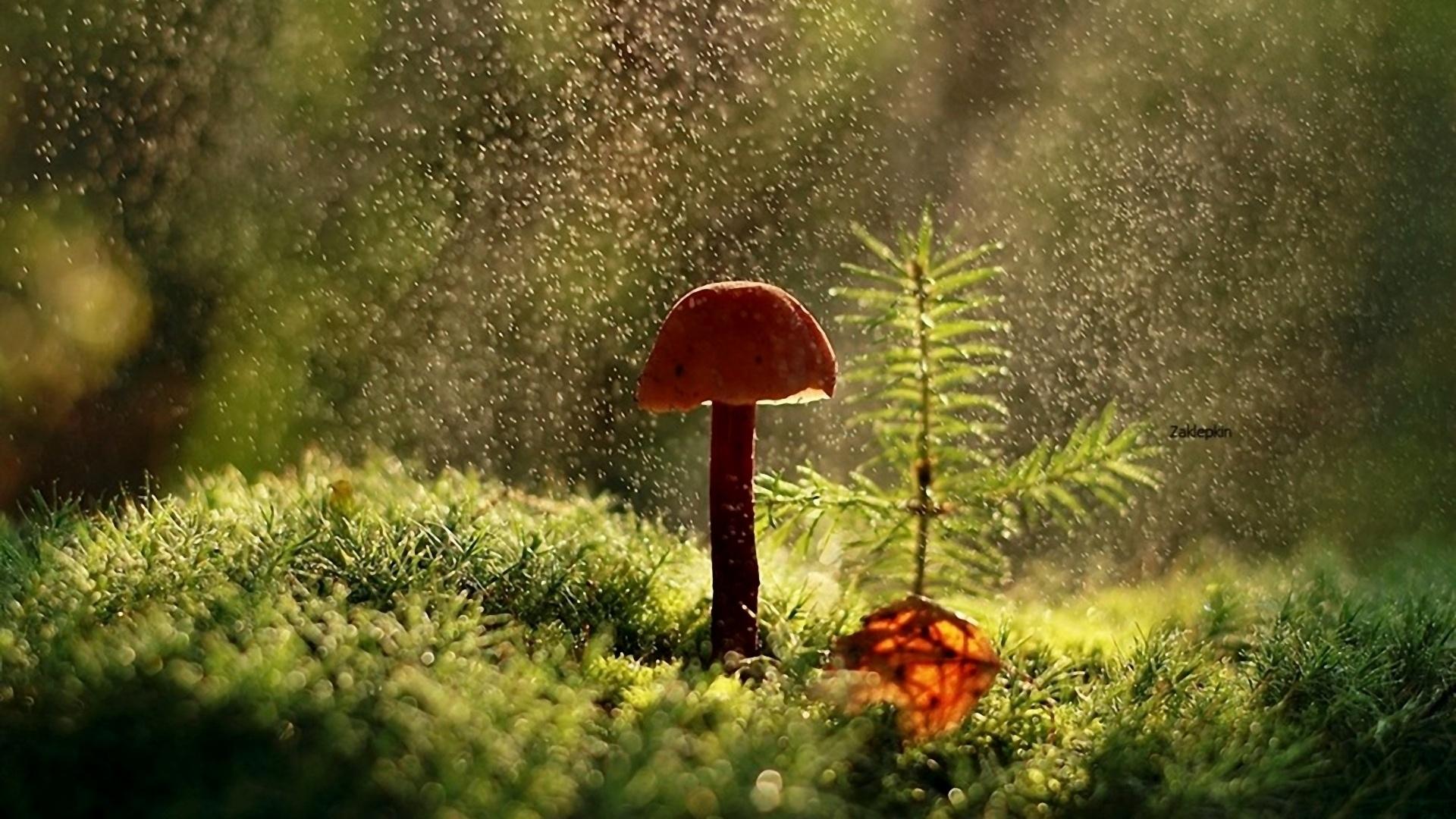 Macro Mushrooms best picture