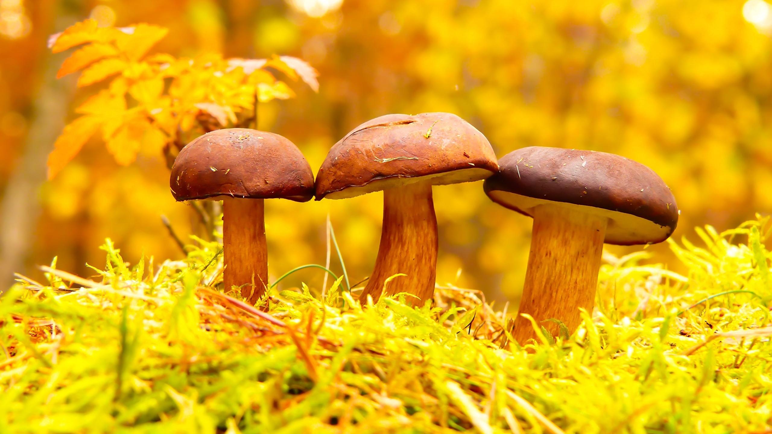 Macro Mushrooms desktop wallpaper free download
