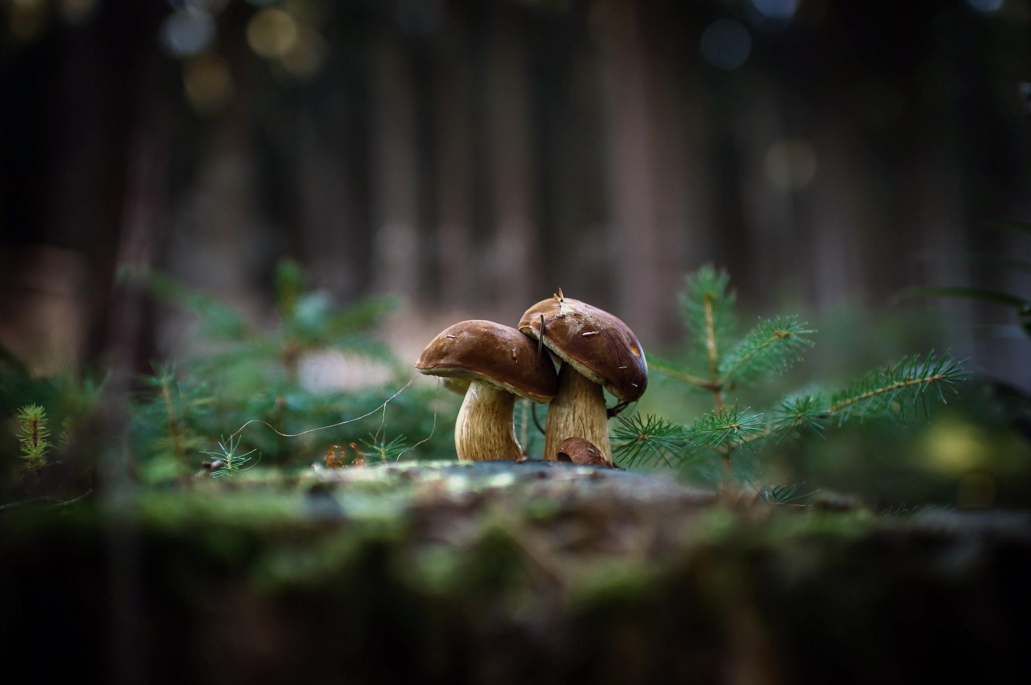 Macro Mushrooms best wallpaper