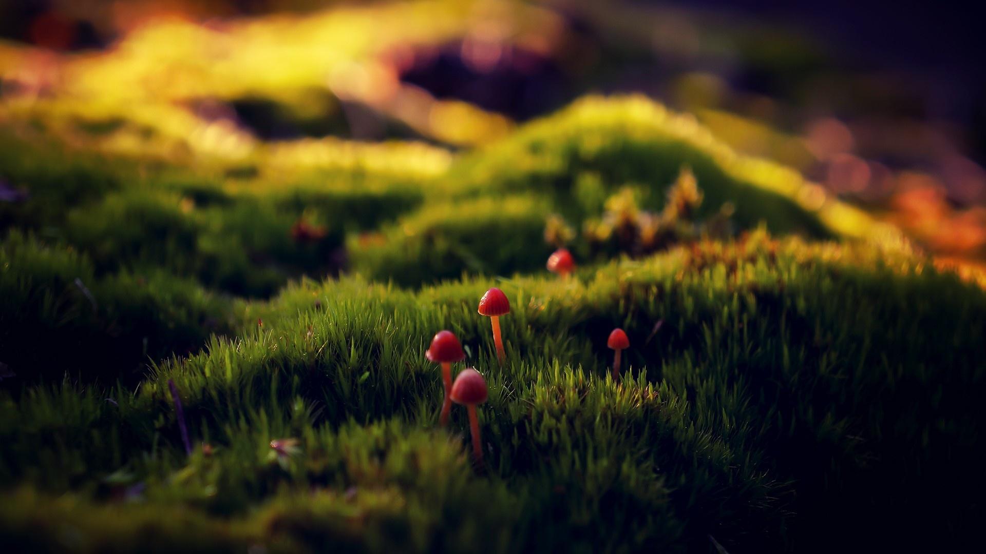 Macro Mushrooms 1920x1080 wallpaper