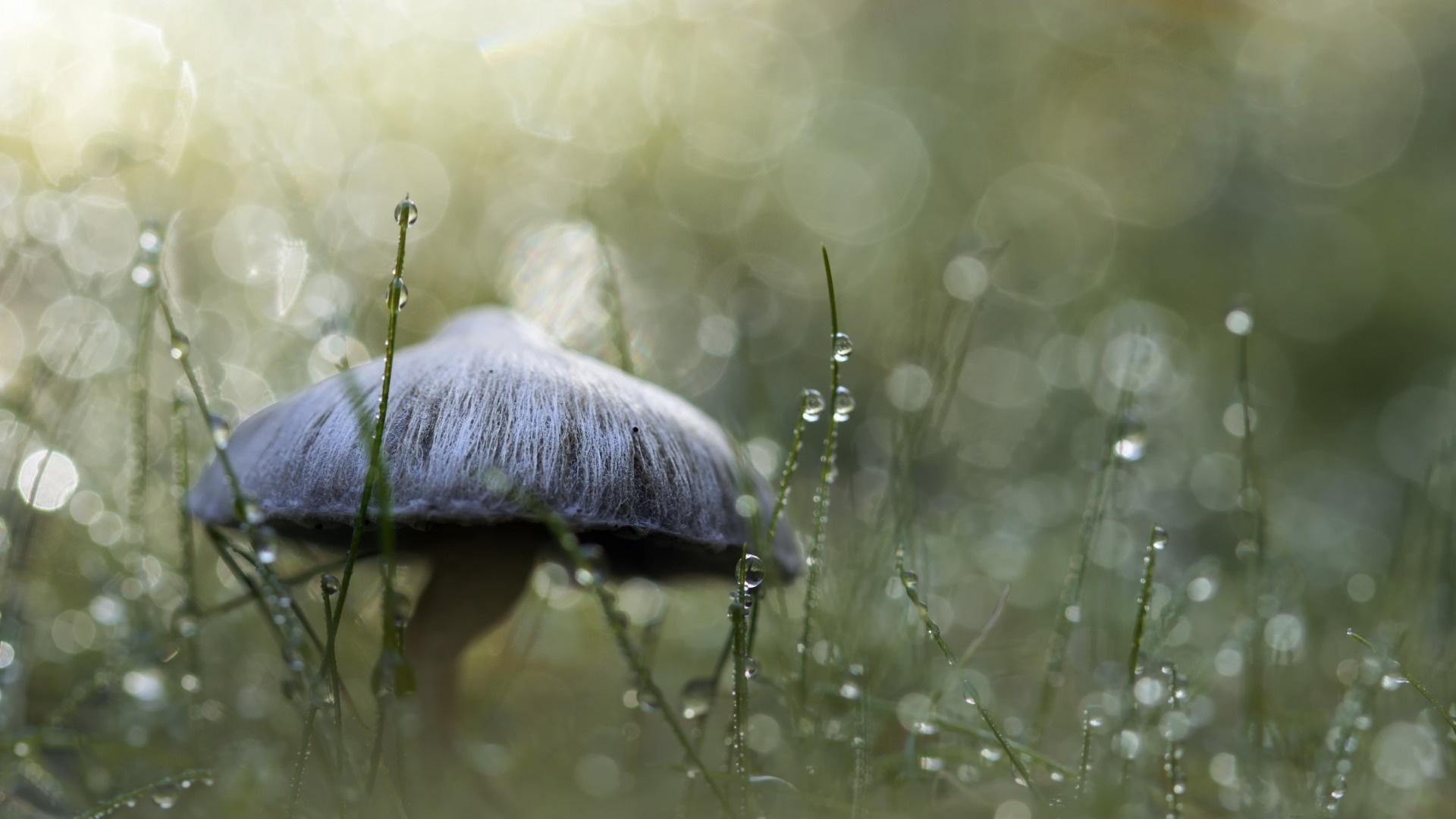 Macro Mushrooms free photo
