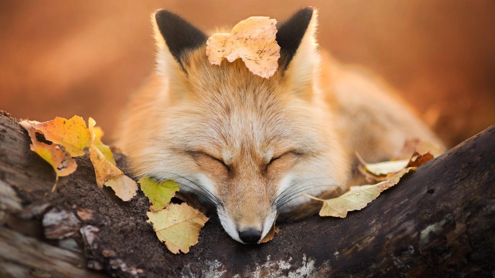 Animal In Autumn background wallpaper