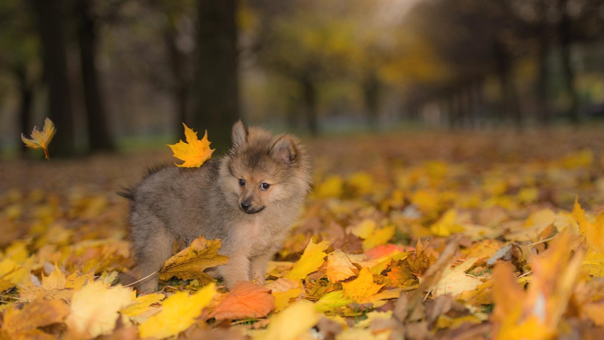 Animal In Autumn best wallpaper