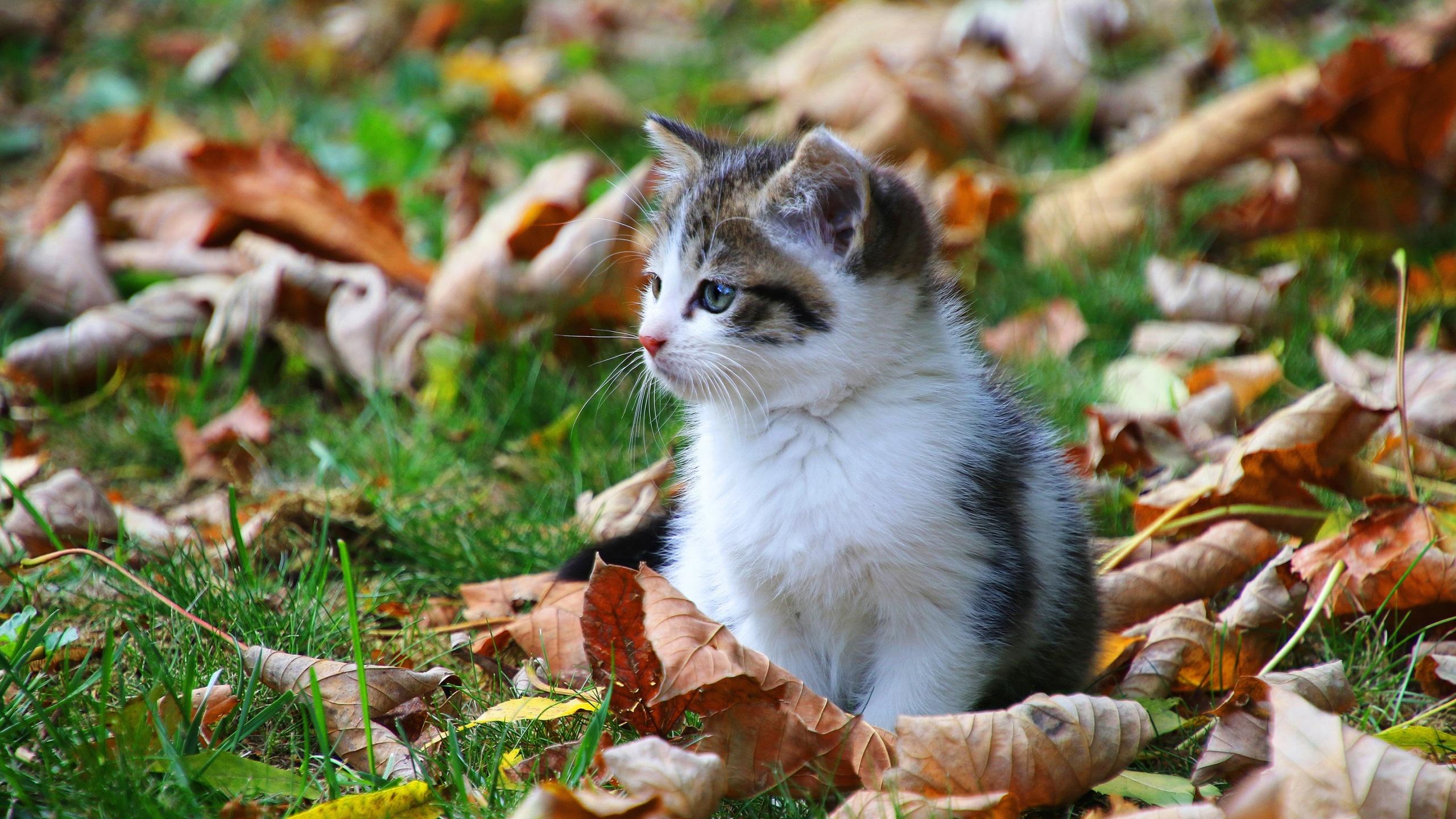 Animal In Autumn laptop wallpaper