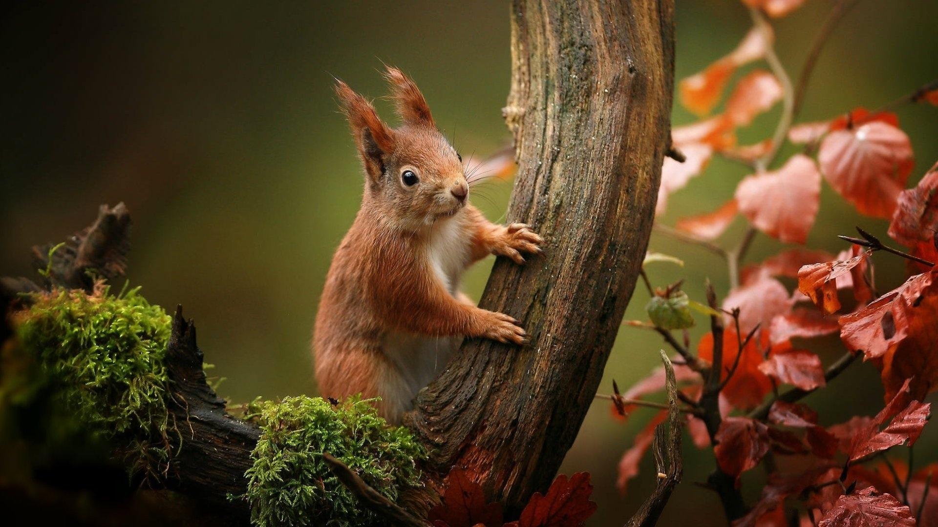Animal In Autumn windows wallpaper