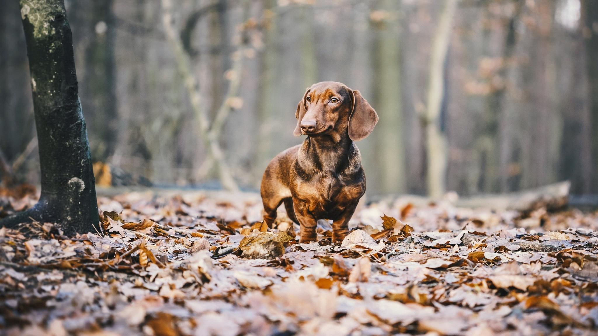 Animal In Autumn best background