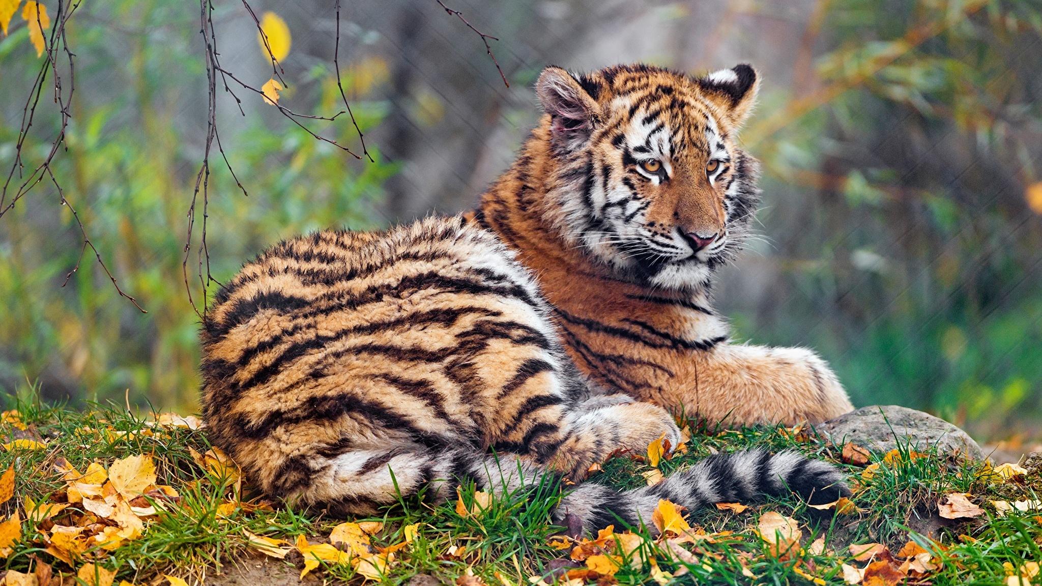 Animal In Autumn best picture