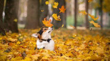 Animal In Autumn wallpaper hd