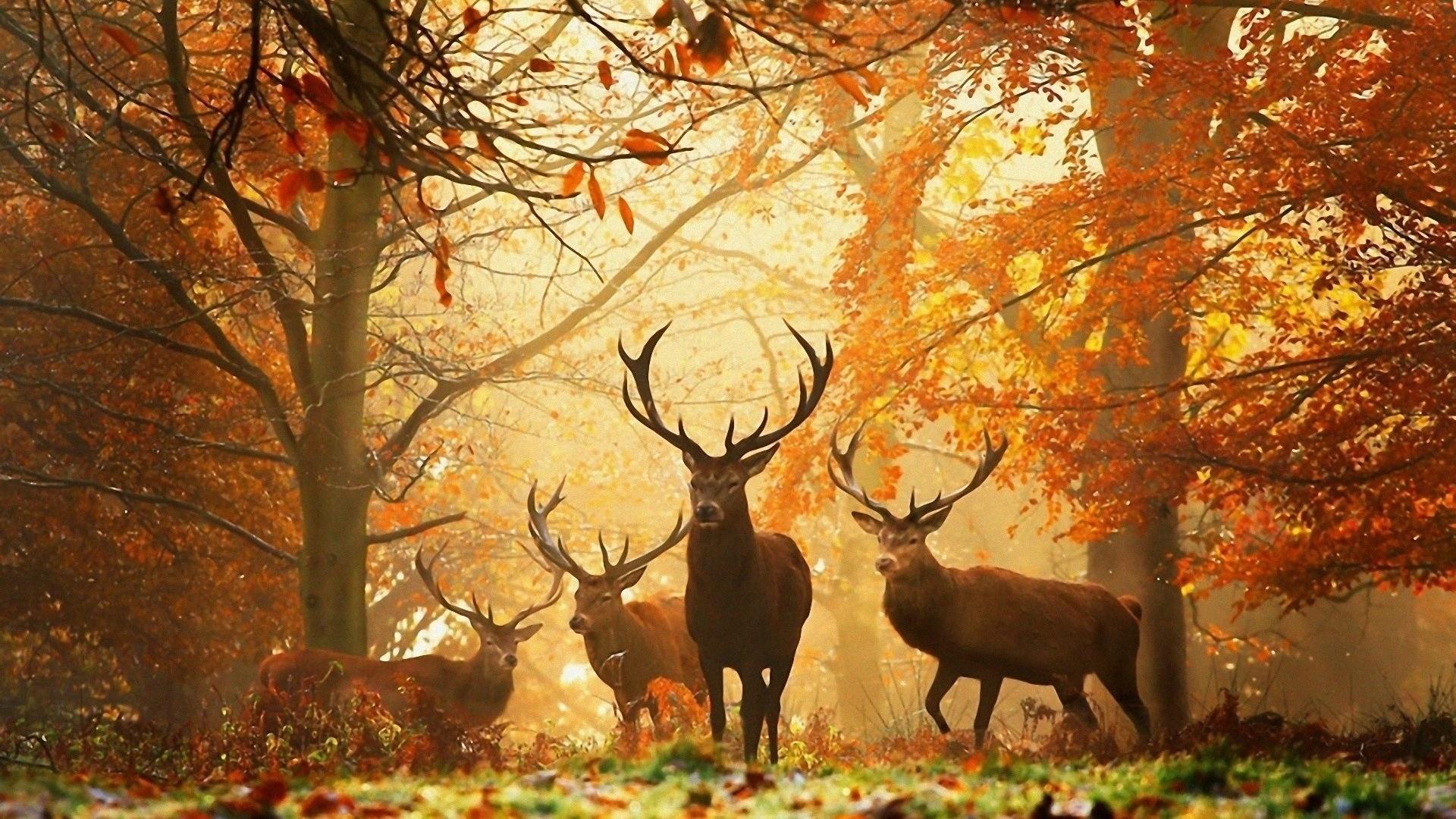 Animal In Autumn hd background