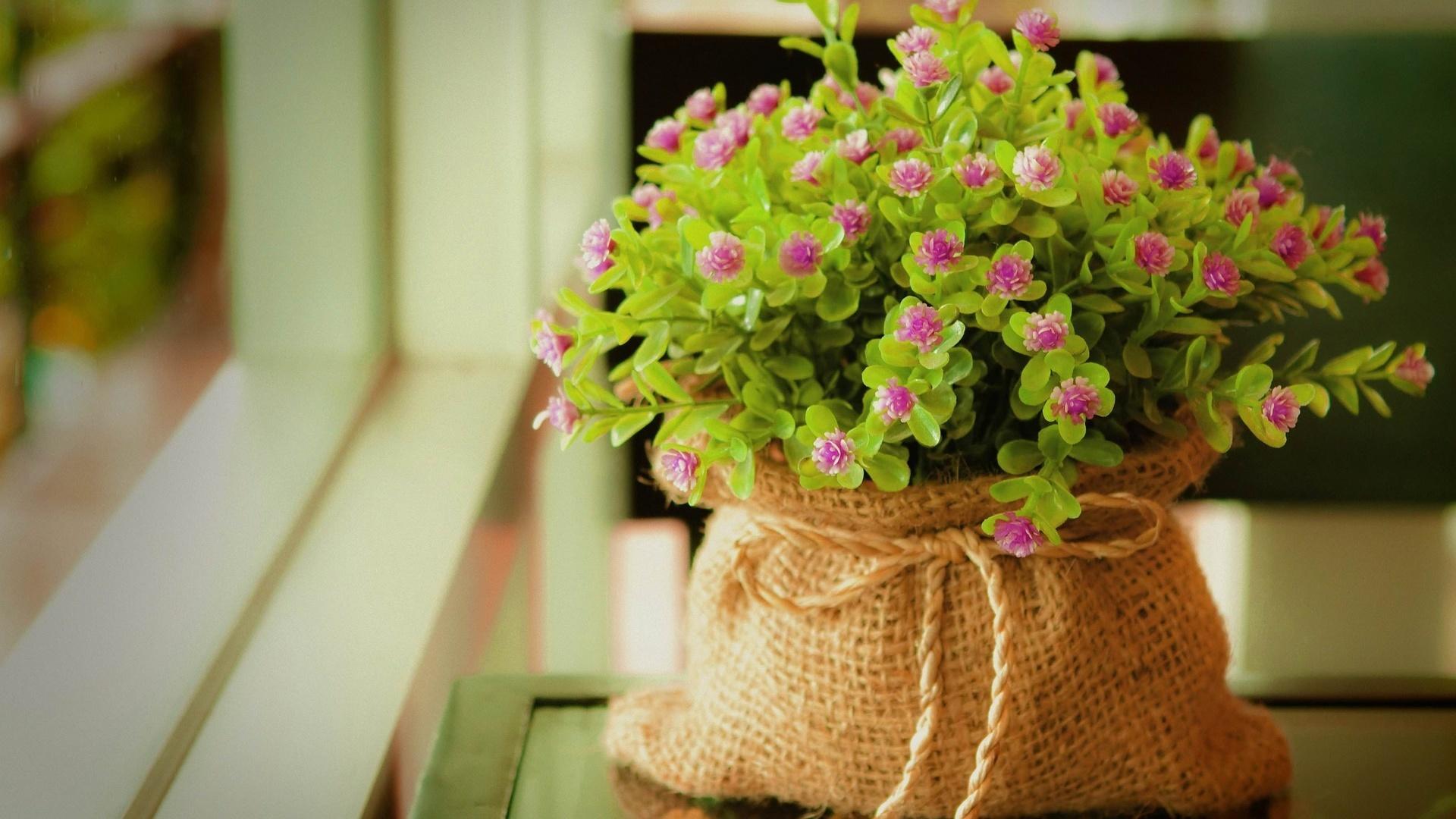 Houseplants desktop wallpaper free download