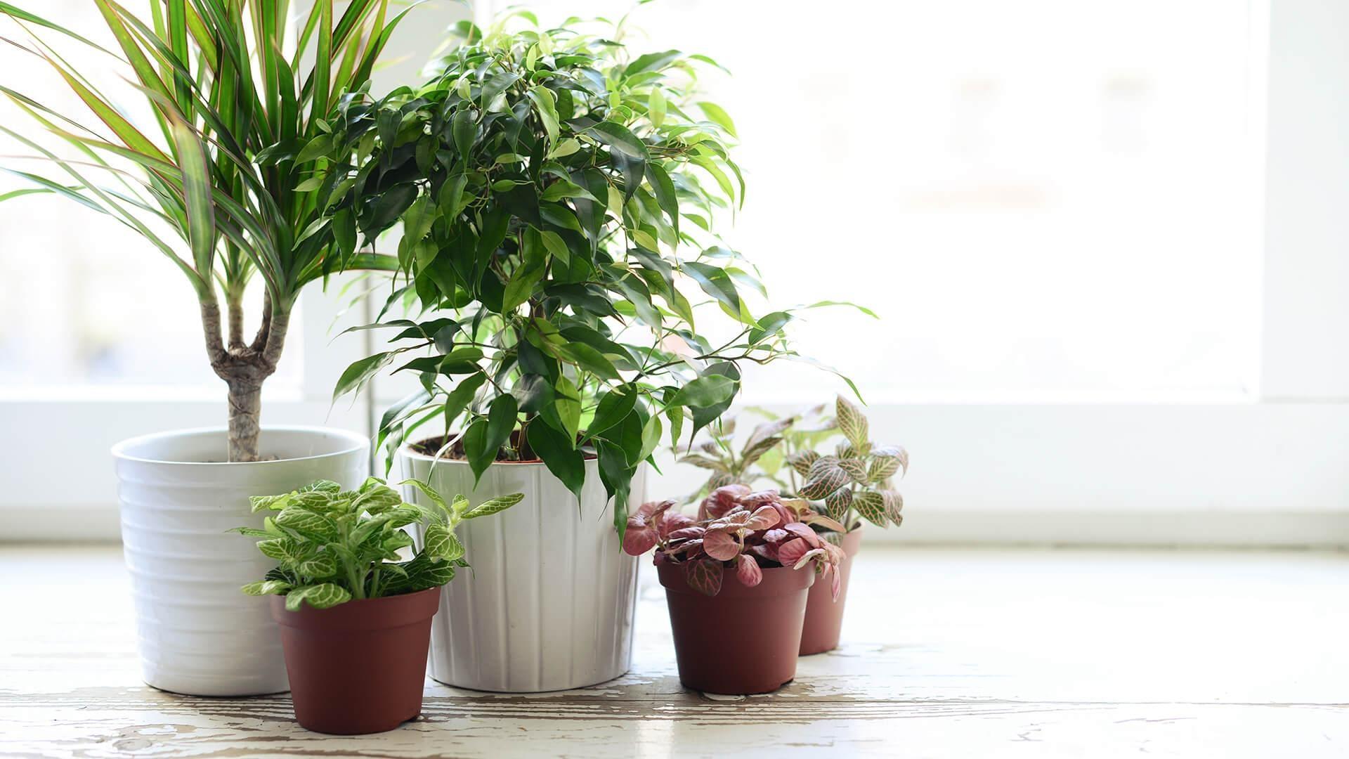 Houseplants hd background