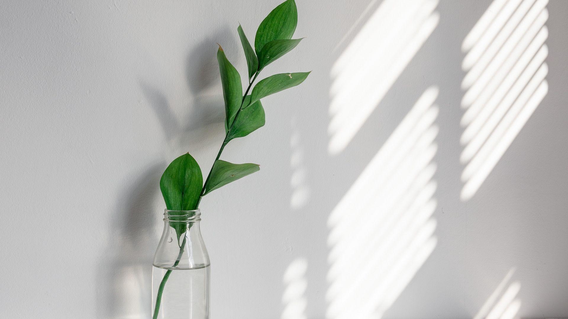 Houseplants pc wallpaper