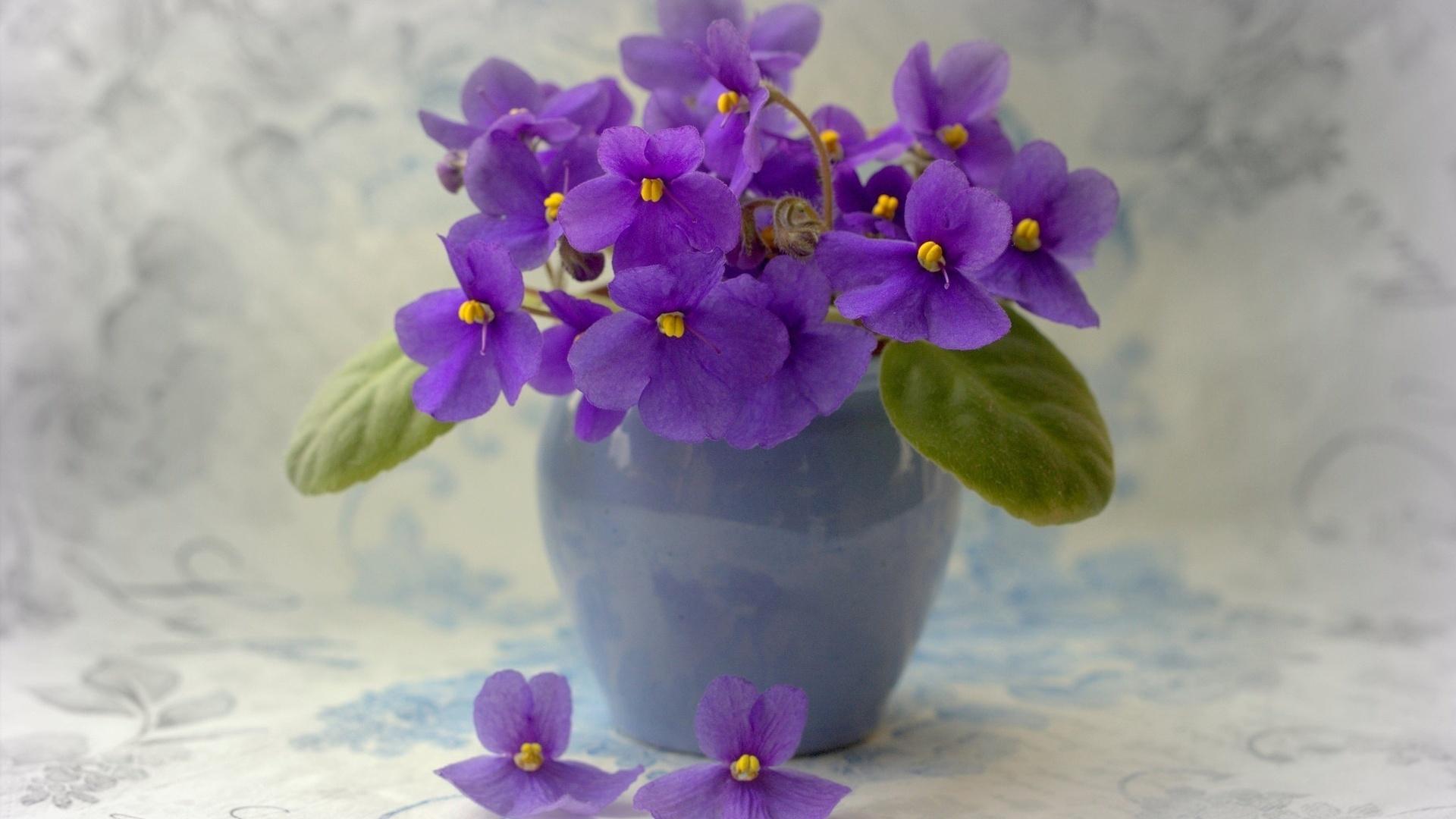 Houseplants free image